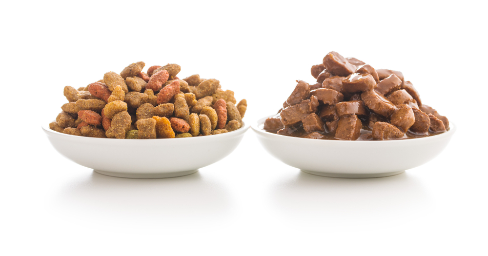 A Guide To Cat Food: Wet Vs. Dry