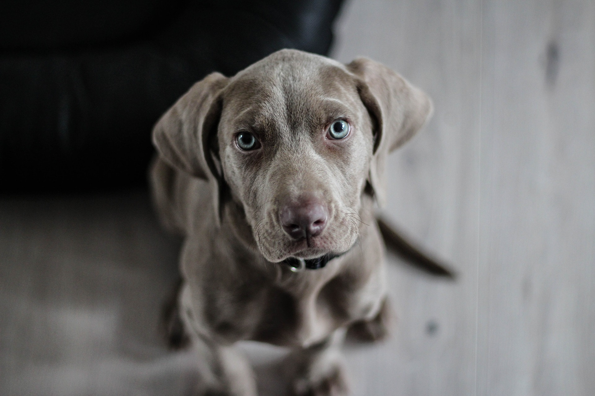 7 Things You Need to Know About CBD for Dog Anxiety | FetchMyVet