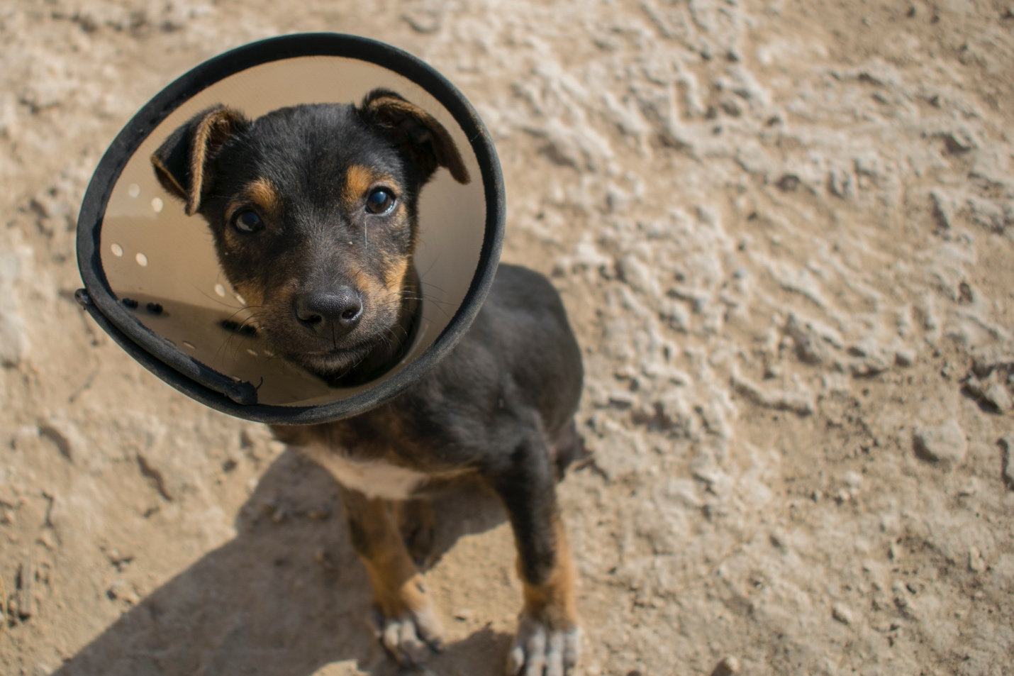 Top 5 Reasons Why You Should Spay or Neuter Your Pet