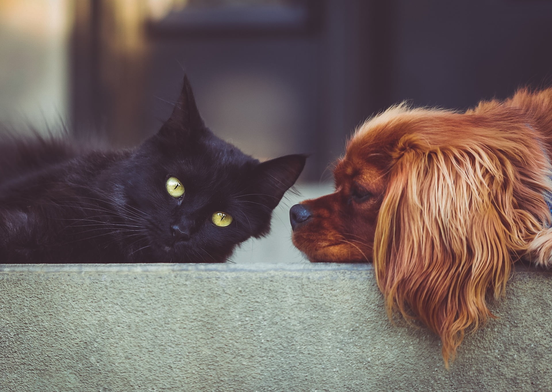 Should I Get a Dog or a Cat? Find Out Which is Best For You