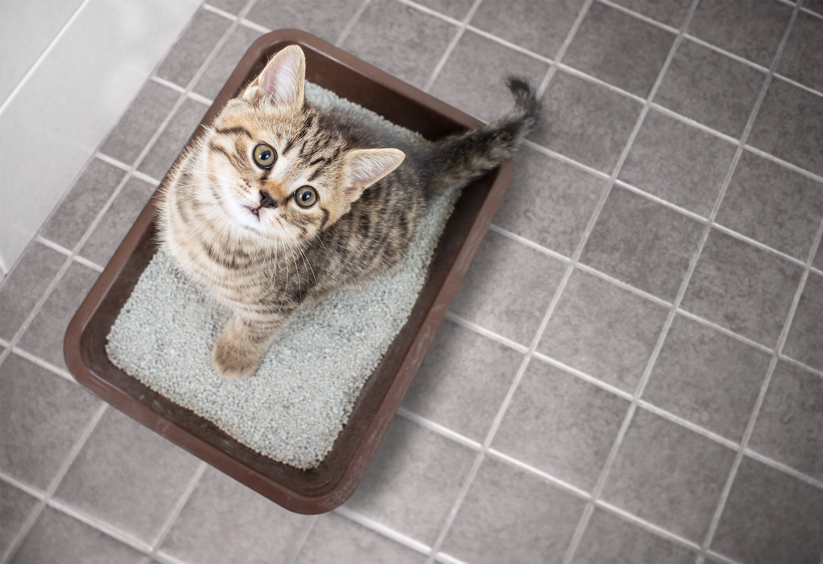 When To Clean Your Cat's Litter Box