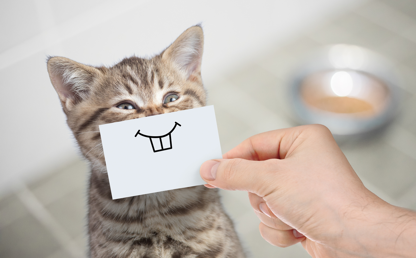 What Dental Products Are Right For Your Cat?